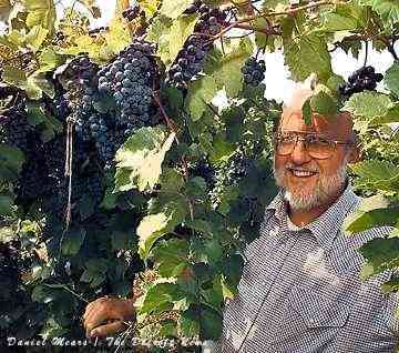 Inspecting wine grapes
