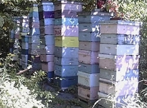 Adding Honey Supers in Summer