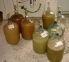 White Wine Making - Over a few Years
