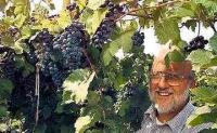 Home Winemaking with Eastern Grapes