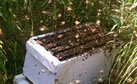Tales from the Observation Hive