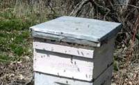 A Year in the Bee Yards - Part I - Late Winter & Spring