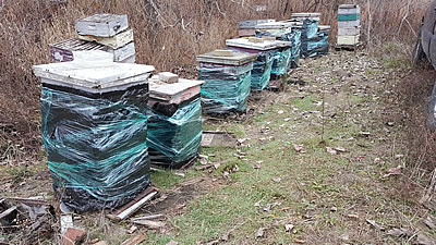 wrapped hives